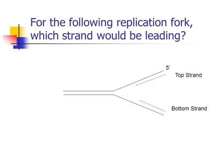 For the following replication fork, which strand would be leading? 5' Top Strand Bottom Strand.