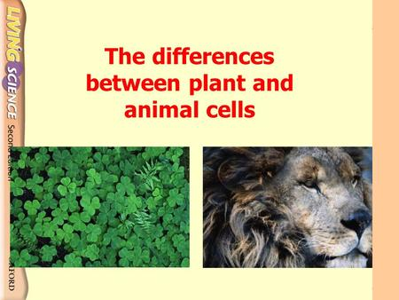 The differences between plant and animal cells What are the differences between them? Animal cells Plant cells.