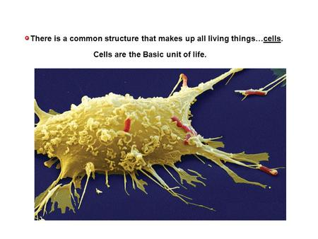 There is a common structure that makes up all living things…cells. Cells are the Basic unit of life.