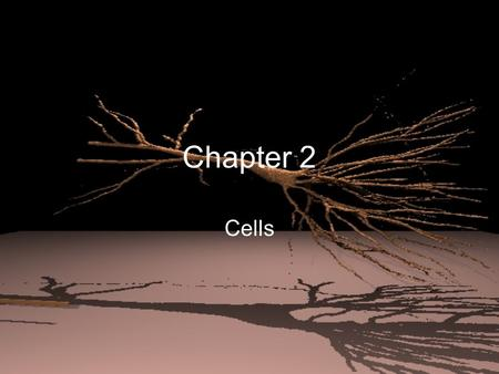 Chapter 2 Cells. Comparing Cells Cells differ in size and shape depending on their function –Ex: nerve cell needs to communicate between places, so it.