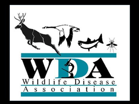 What is WDA? WDA is all wildlife diseases, all conservation, all one health, all the time Wildlife and Environmental Health Human Health Domestic Animal.