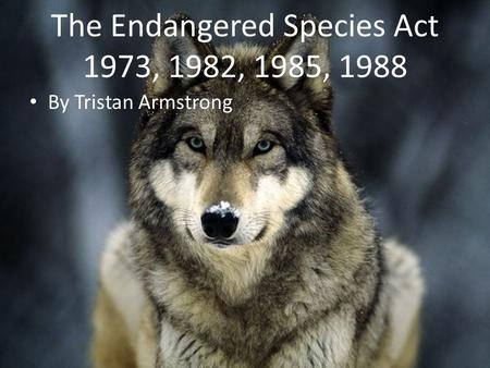 The Endangered Species Act 1973, 1982, 1985, 1988 By Tristan Armstrong.