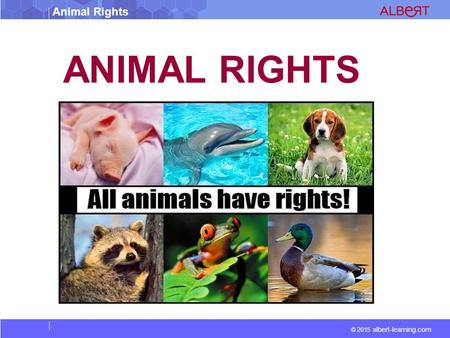 © 2015 albert-learning.com Animal Rights ANIMAL RIGHTS.