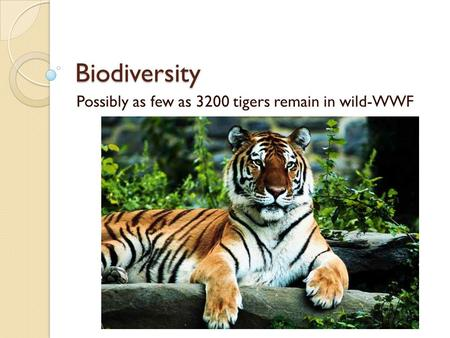 Biodiversity Possibly as few as 3200 tigers remain in wild-WWF.