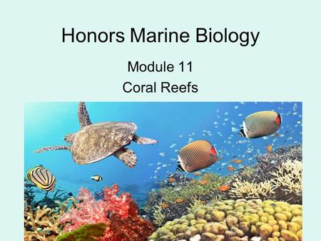 Honors Marine Biology Module 11 Coral Reefs. Class Challenge The Best Joke.