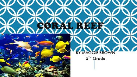 CORAL REEF BY MAGGIE BROWN 5 TH Grade WHAT ARE CORAL REEFS???? Coral reefs are communities of living organisms. About 25% of marine life lives in the.