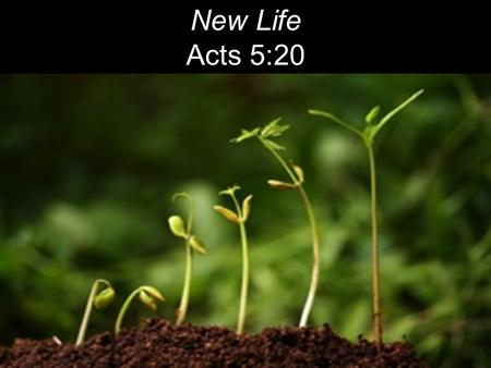 "New Life Acts 5:20. The next day John saw Jesus coming toward him and said, ""Behold, the Lamb of God, who takes away the sin of the world!"" John 1:29."