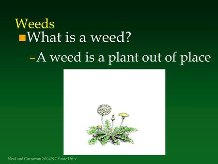 Neal and Carrawan 2004 NC State Univ Weeds n What is a weed? –A weed is a plant out of place.