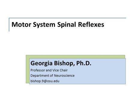 Motor System Spinal Reflexes Georgia Bishop, Ph.D. Professor and Vice Chair Department of Neuroscience