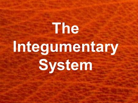 The Integumentary System. Skin, Hair and Nails Now using the microscopes. Examine your skin, hair and nails. In your spiral, diagram what you see.