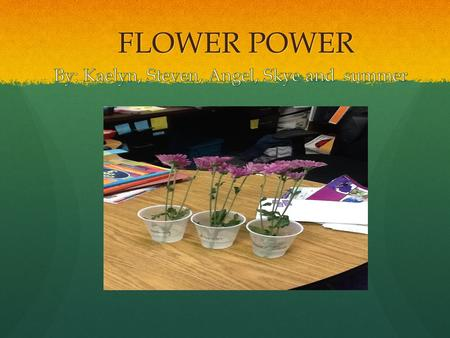 FLOWER POWER. QUESTION What is the best way to keep a flower alive the longest?