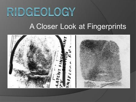 A Closer Look at Fingerprints. Ridgeology: The study of the uniqueness of friction ridge structures and their use for personal identification. 1 The koala.