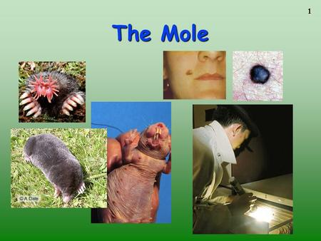 1 The Mole. 2 3 4 5 A counting unit Similar to a dozen, but instead of 12, it's 602 billion trillion 602,000,000,000,000,000,000,000 6.02 X 10 23 (in.