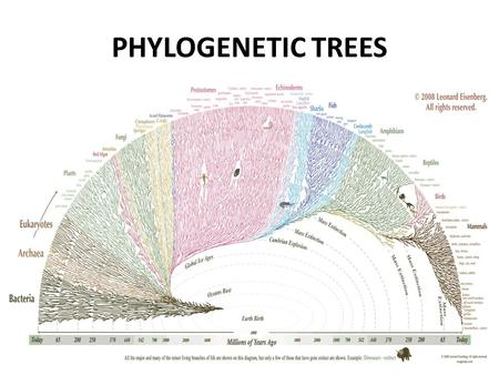 PHYLOGENETIC TREES. A phylogeny, or species/evolutionary tree, represents the evolutionary relationships among a set of organisms or groups of organisms,