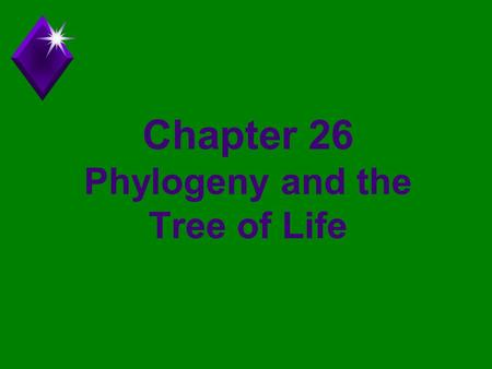 Chapter 26 Phylogeny and the Tree of Life. Phylogeny u Phylon = tribe, geny = genesis or origin u The evolutionary history of a species or a group of.