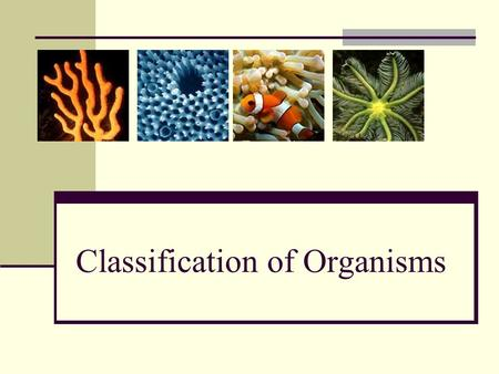 Classification of Organisms. Levels of Classification 3 Domains Phylum Kingdom Domain Class Order Family Genus Species 6 Kingdoms Plants Animals Archaebacteria.