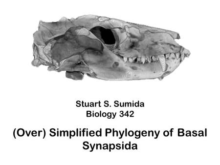 (Over) Simplified Phylogeny of Basal Synapsida