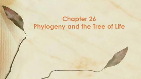 Chapter 26 Phylogeny and the Tree of Life. Objective SWBAT explain and demonstrate that organisms share many conserved core processes and features that.