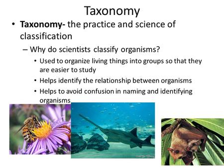Taxonomy Taxonomy- the practice and science of classification – Why do scientists classify organisms? Used to organize living things into groups so that.