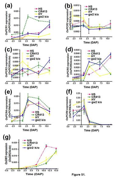 (a) (b) (c) (d) (e) (f) (g) Figure S1.. Figure S1. Comparison of OsPCR1-6 and GW2 transcript levels in the grains of developing gw2 and wild-type isogenic.