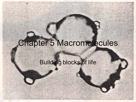 Chapter 5 Macromolecules Building blocks of life.