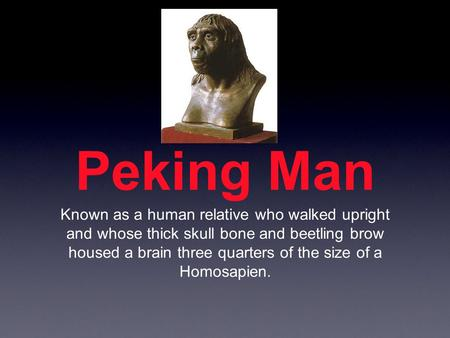 Peking Man Known as a human relative who walked upright and whose thick skull bone and beetling brow housed a brain three quarters of the size of a Homosapien.