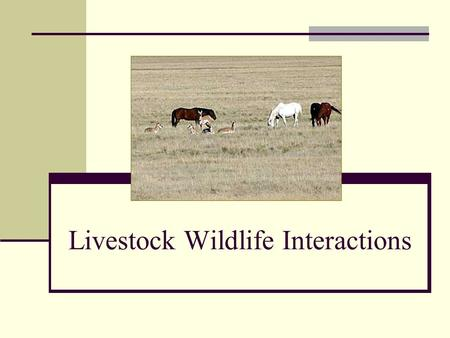 Livestock Wildlife Interactions. Introduction Important concerns Competition - forages, water, cover Income opportunities How landowners can make wildlife.