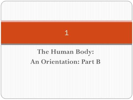 The Human Body: An Orientation: Part B 1. Chapter 1, part b This part will be your lab assignment. Make sure you know your anatomical terminology, anatomical.