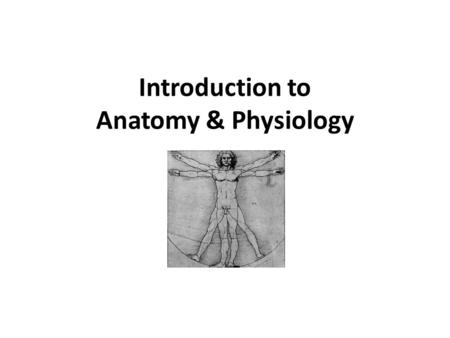 Introduction to Anatomy & Physiology. Anatomy – Structural organization of living things Physiology – Basic processes that occur in the human body.