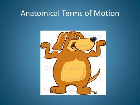 Anatomical Terms of Motion