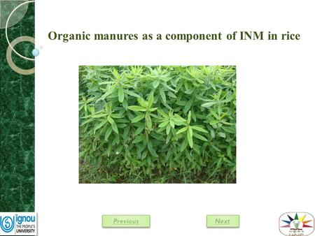 Organic manures as a component of INM in rice Next Previous.