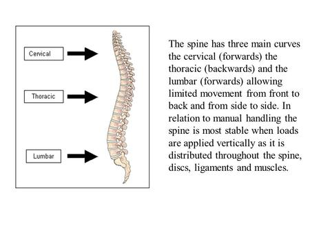 The spine has three main curves the cervical (forwards) the thoracic (backwards) and the lumbar (forwards) allowing limited movement from front to back.