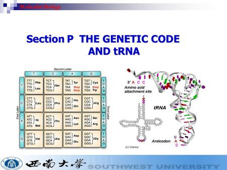 Molecular Biology Section P THE GENETIC CODE AND tRNA.