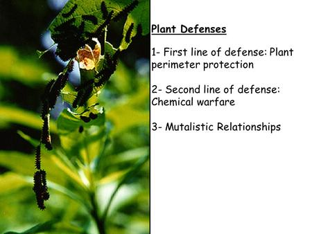 Plant Defenses 1- First line of defense: Plant perimeter protection 2- Second line of defense: Chemical warfare 3- Mutalistic Relationships.