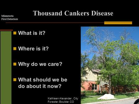Minnesota First Detectors Thousand Cankers Disease What is it? Where is it? Why do we care? What should we be do about it now? Kathleen Alexander, City.