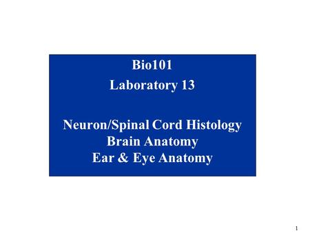 1 Bio101 Laboratory 13 Neuron/Spinal Cord Histology Brain Anatomy Ear & Eye Anatomy.