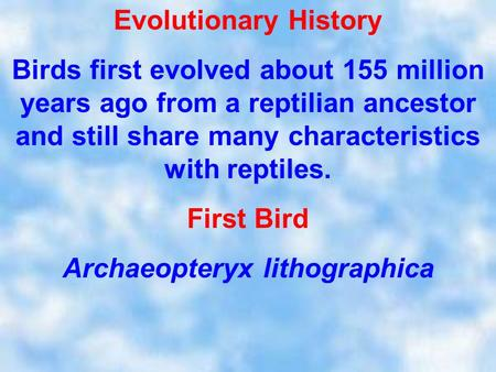 Evolutionary History Birds first evolved about 155 million years ago from a reptilian ancestor and still share many characteristics with reptiles. First.