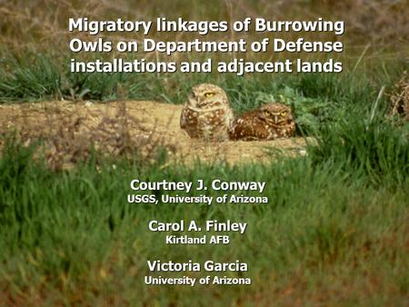 Migratory linkages of Burrowing Owls on Department of Defense installations and adjacent lands Courtney J. Conway USGS, University of Arizona Carol A.