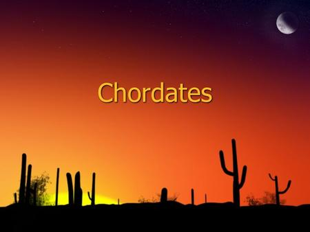 Chordates. ◊What is a chordate? 1. Has either a backbone or a notochord (vertebrate) 2. Can either be an ectotherm or an endotherm ◊What is a chordate?
