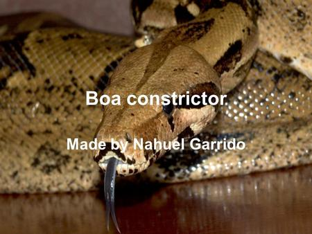 Boa constrictor Made by Nahuel Garrido. Description Boa constrictors are pinkish or tan in colour, with dark crossbands. They range in length is from.