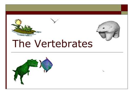 The Vertebrates. Vertebrate Characteristics  Vertebrae (backbone)  Notochord (flexible dorsal rod)  Nerve cord (hollow) with brain  Three layers of.