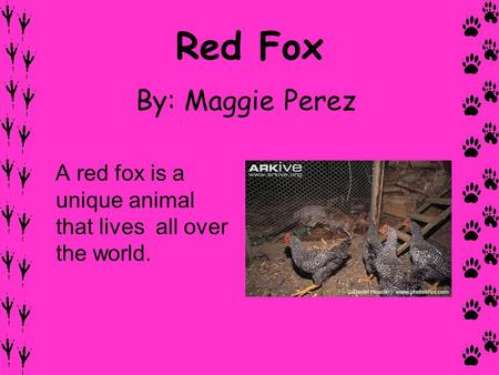 Red Fox By: Maggie Perez A red fox is a unique animal that lives all over the world.