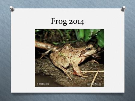 Frog 2014. What is a Frog? There are around 3,900 species of tailless amphibians, or Anura, also called Salientia, including the frog and toad. Frogs.