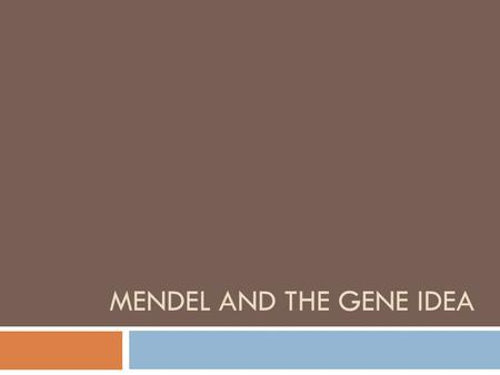 MENDEL AND THE GENE IDEA. The Father of Genetics  Gregor Mendel  (1822-1884)  Austrian Monk  Studied inheritance in pea plants  Responsible for the.