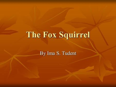 The Fox Squirrel By Ima S. Tudent. The Fox Squirrel's Diet Nuts: Hickory nuts, mulberry nuts, acorns, walnuts and hawthorne seeds Nuts: Hickory nuts,