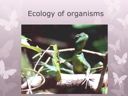 Ecology of organisms. Ever changing environment  Organisms must be able to adjust to change in both the abiotic and biotic factors  These factors influence.