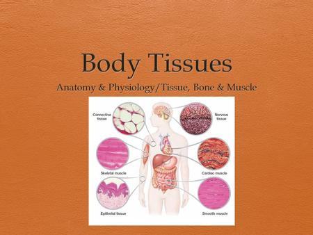 Body Tissues Overview  Tissues are groups of cells with similar structures and functions.  There are four basic types of tissues that each have their.
