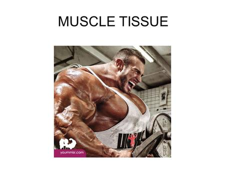 MUSCLE TISSUE. skeletalsmoothcardiac Additional common names Striated voluntary m. Visceral muscle m. Non-striated involuntary m. Striated involuntary.