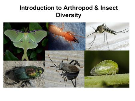Introduction to Arthropod & Insect Diversity. Scientific Classification Kingdom General specific Class Division/Phylum species Order Family Genus.