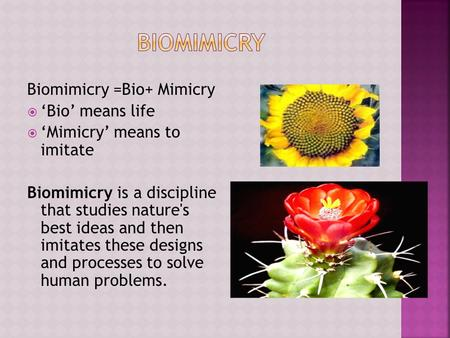 Biomimicry =Bio+ Mimicry  'Bio' means life  'Mimicry' means to imitate Biomimicry is a discipline that studies nature's best ideas and then imitates.